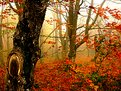 Picture Title - Lothlorien Forest