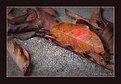 Picture Title - Close-up Color