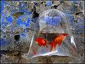 Picture Title - Captive Chromatica