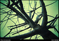 Picture Title - Tree, in a week day