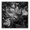 Picture Title - Autunno in BW