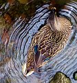 Picture Title - Ripples