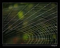 Picture Title - Spider's Web
