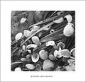 Picture Title - Shells of love