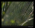 Picture Title - Spider's Web -2-
