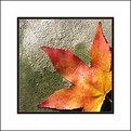 Picture Title - Sun autumn