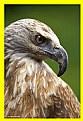 Picture Title - eagle