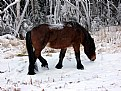 Picture Title - Wild Horse