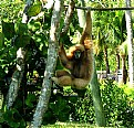 Picture Title - Hanging around