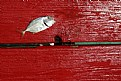 Picture Title - Fish On Red
