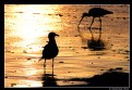 Picture Title - sunset, relax, birds