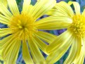 Picture Title - Yellow 2