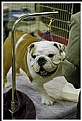 Picture Title - Best of Breed