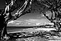 Picture Title - Itaparica
