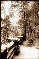 Picture Title - winter path