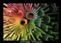 Picture Title - Slinky flower II  original size