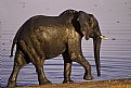 Picture Title - Elephant Bronze