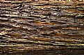 Picture Title - Redwood Bark