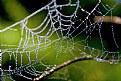 Picture Title - Teia de aranha