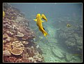 Picture Title - Flinders Reef #1