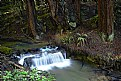 Picture Title - Waterfall in REdwoods