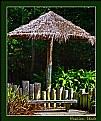 Picture Title - Hawaiian Shade