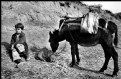 Picture Title - Donkey (Albania)