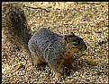 Picture Title - Squirrely Business