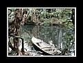 Picture Title - Selva del Darien  # 3