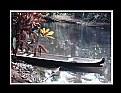 Picture Title - Selva del Darién  # 5