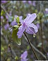 Picture Title - Springtime & rain