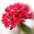 Picture Title - antigua flower #1