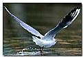 Picture Title - il decollo