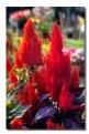 Picture Title - Colour