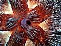 Picture Title - Sea Urchin