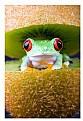 Picture Title - Fruit Sandwich