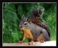 Picture Title - Mr. Squirrel