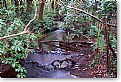 Picture Title - Woodland Stream