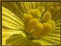 Picture Title - Flor da bucha