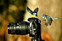 Picture Title - Bird Photgraphy