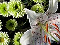 Picture Title - Lily,