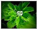 Picture Title - Diamonds