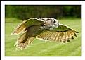 Picture Title - Siberian Eagle Owl