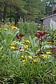 Picture Title - plantation flower garden