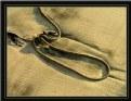 Picture Title - Sand lasso