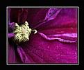 Picture Title - Purple