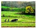 Picture Title - Village life