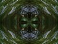 Picture Title - Forested Abstract