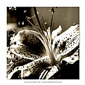 Picture Title - Memmories of a flower