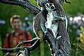 Picture Title - chillin in the tree